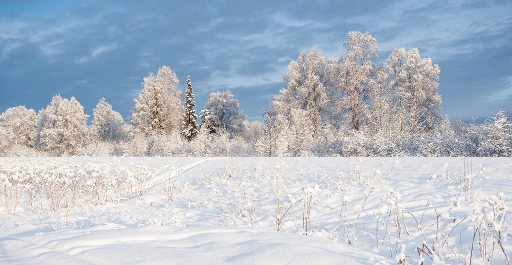 Winter Dreams at Talkeetna