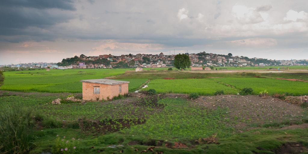 Ricefields at Antananarivo